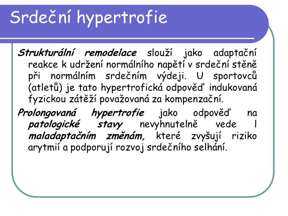 Srdeční hypertrofie Strukturální remodelace slouží jako adaptační reakce k udržení normálního napětí v srdeční stěně při normálním srdečním výdeji. U