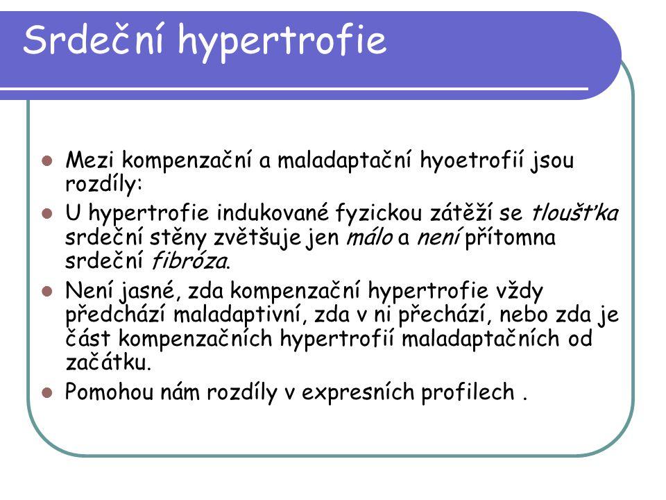 Srdeční hypertrofie Mezi kompenzační a maladaptační hyoetrofií jsou rozdíly: U hypertrofie indukované fyzickou zátěží se tloušťka srdeční stěny zvětšu