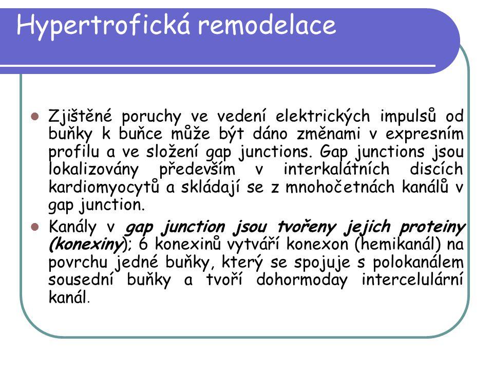 Hypertrofická remodelace Zjištěné poruchy ve vedení elektrických impulsů od buňky k buňce může být dáno změnami v expresním profilu a ve složení gap j