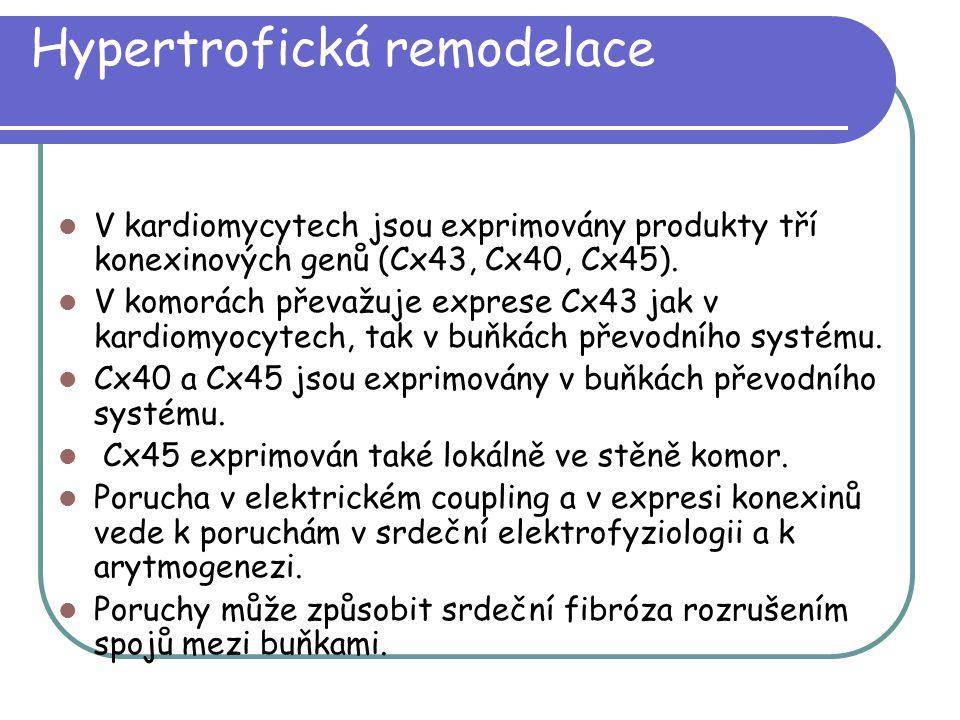 Hypertrofická remodelace V kardiomycytech jsou exprimovány produkty tří konexinových genů (Cx43, Cx40, Cx45). V komorách převažuje exprese Cx43 jak v