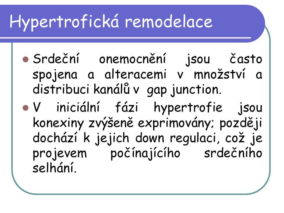 Hypertrofická remodelace Srdeční onemocnění jsou často spojena a alteracemi v množství a distribuci kanálů v gap junction. V iniciální fázi hypertrofi