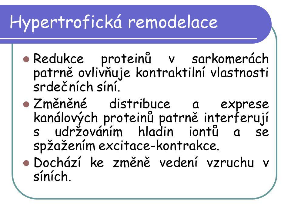 Hypertrofická remodelace Redukce proteinů v sarkomerách patrně ovlivňuje kontraktilní vlastnosti srdečních síní. Změněné distribuce a exprese kanálový