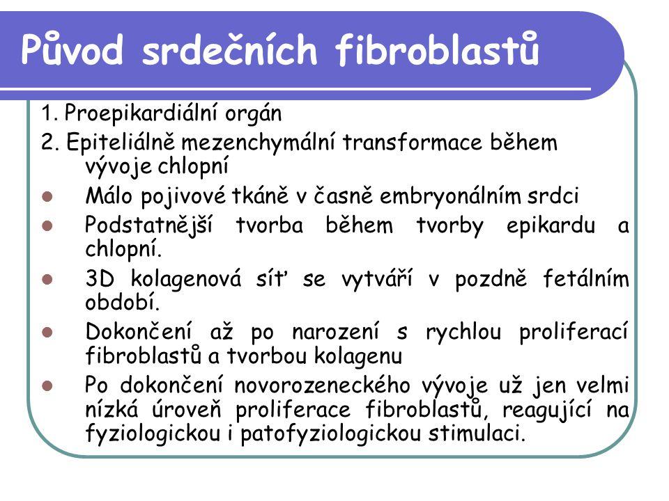 Původ srdečních fibroblastů 1. Proepikardiální orgán 2. Epiteliálně mezenchymální transformace během vývoje chlopní Málo pojivové tkáně v časně embryo