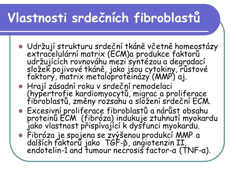 Vlastnosti srdečních fibroblastů Udržují strukturu srdeční tkáně včetně homeostázy extracelulární matrix (ECM)a produkce faktorů udržujících rovnováhu