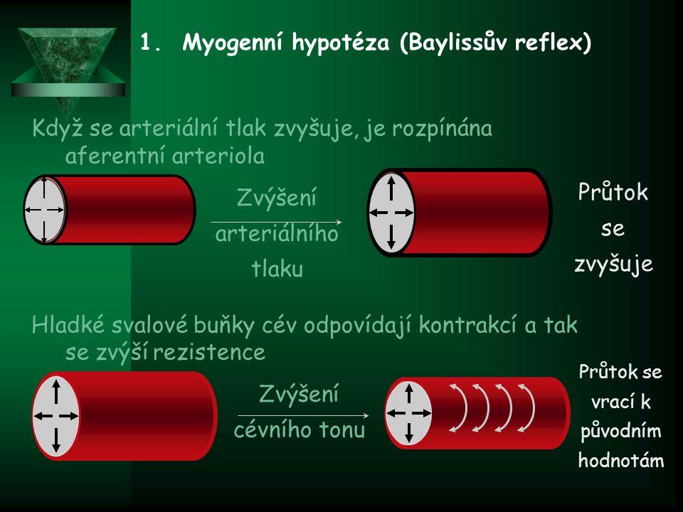1. Myogenní hypotéza (Baylissův reflex) Když se arteriální tlak zvyšuje, je rozpínána aferentní arteriola Hladké svalové buňky cév odpovídají kontrakc