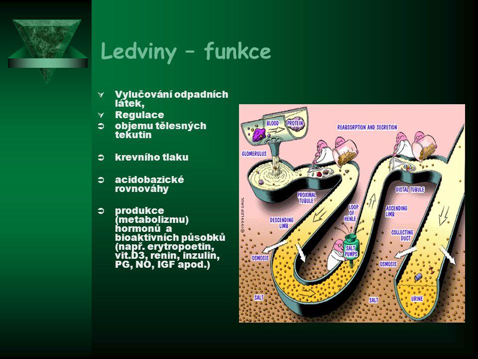 Mechanismus účinku aldosteronu v distálním tubulu
