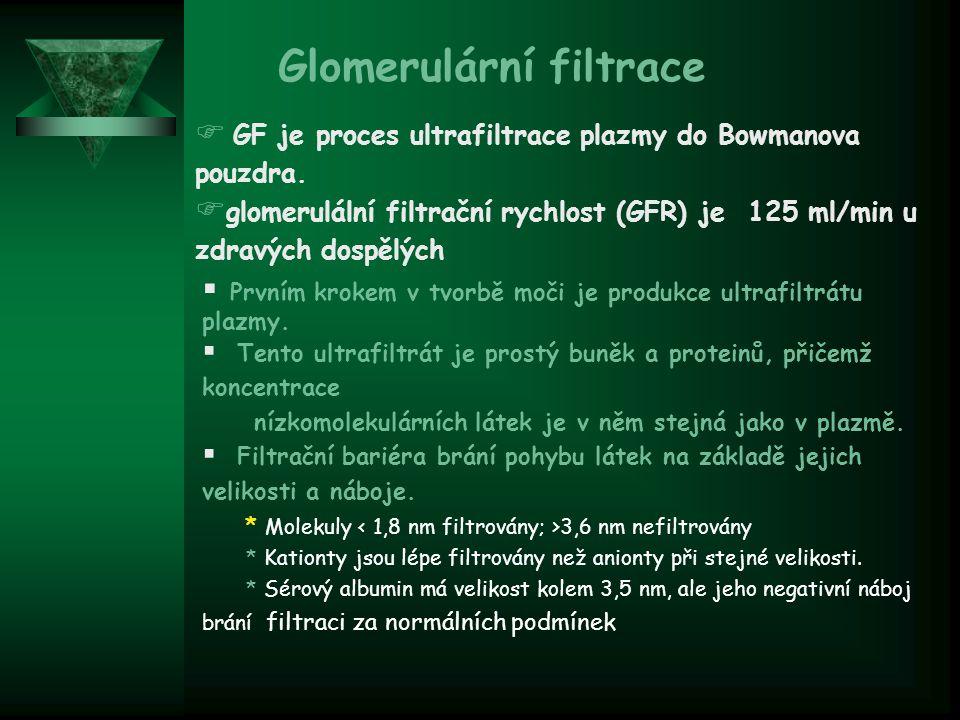 Proteinurie  Méně než 150 mg/den  Skládá se z filtrovaných plazmarických proteinů (60%) a tubulárních Tamm-Horsfall proteinů (40%).
