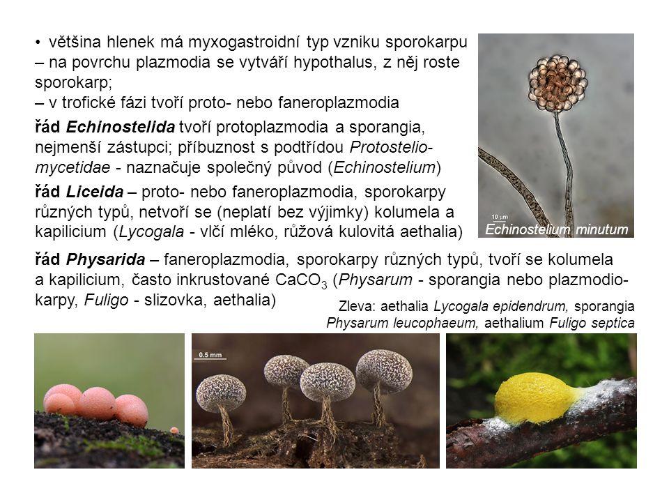 většina hlenek má myxogastroidní typ vzniku sporokarpu – na povrchu plazmodia se vytváří hypothalus, z něj roste sporokarp; – v trofické fázi tvoří proto- nebo faneroplazmodia řád Echinostelida tvoří protoplazmodia a sporangia, nejmenší zástupci; příbuznost s podtřídou Protostelio- mycetidae - naznačuje společný původ (Echinostelium) řád Liceida – proto- nebo faneroplazmodia, sporokarpy různých typů, netvoří se (neplatí bez výjimky) kolumela a kapilicium (Lycogala - vlčí mléko, růžová kulovitá aethalia) řád Physarida – faneroplazmodia, sporokarpy různých typů, tvoří se kolumela a kapilicium, často inkrustované CaCO 3 (Physarum - sporangia nebo plazmodio- karpy, Fuligo - slizovka, aethalia) Zleva: aethalia Lycogala epidendrum, sporangia Physarum leucophaeum, aethalium Fuligo septica Echinostelium minutum