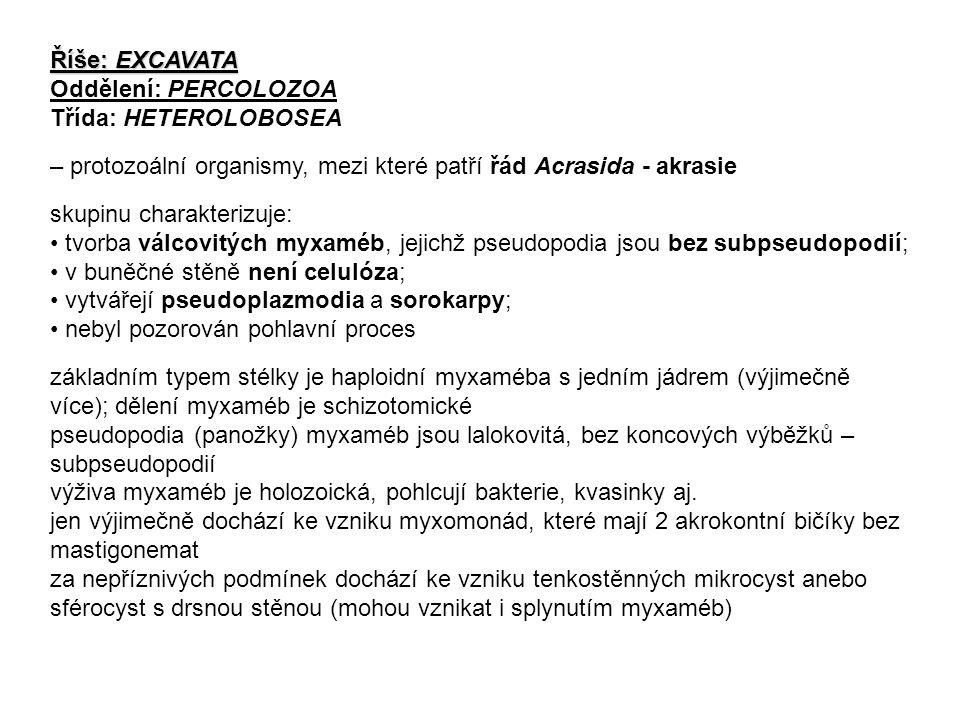 Říše: EXCAVATA Oddělení: PERCOLOZOA Třída: HETEROLOBOSEA – protozoální organismy, mezi které patří řád Acrasida - akrasie skupinu charakterizuje: tvorba válcovitých myxaméb, jejichž pseudopodia jsou bez subpseudopodií; v buněčné stěně není celulóza; vytvářejí pseudoplazmodia a sorokarpy; nebyl pozorován pohlavní proces základním typem stélky je haploidní myxaméba s jedním jádrem (výjimečně více); dělení myxaméb je schizotomické pseudopodia (panožky) myxaméb jsou lalokovitá, bez koncových výběžků – subpseudopodií výživa myxaméb je holozoická, pohlcují bakterie, kvasinky aj.