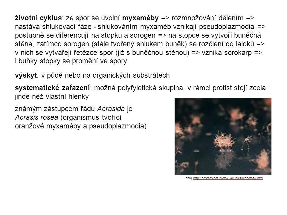 životní cyklus: ze spor se uvolní myxaméby => rozmnožování dělením => nastává shlukovací fáze - shlukováním myxaméb vznikají pseudoplazmodia => postupně se diferencují na stopku a sorogen => na stopce se vytvoří buněčná stěna, zatímco sorogen (stále tvořený shlukem buněk) se rozčlení do laloků => v nich se vytvářejí řetězce spor (již s buněčnou stěnou) => vzniká sorokarp => i buňky stopky se promění ve spory výskyt: v půdě nebo na organických substrátech systematické zařazení: možná polyfyletická skupina, v rámci protist stojí zcela jinde než vlastní hlenky známým zástupcem řádu Acrasida je Acrasis rosea (organismus tvořící oranžové myxaméby a pseudoplazmodia) Zdroj: http://cosmos.bot.kyoto-u.ac.jp/csm/photos-j.htmlhttp://cosmos.bot.kyoto-u.ac.jp/csm/photos-j.html