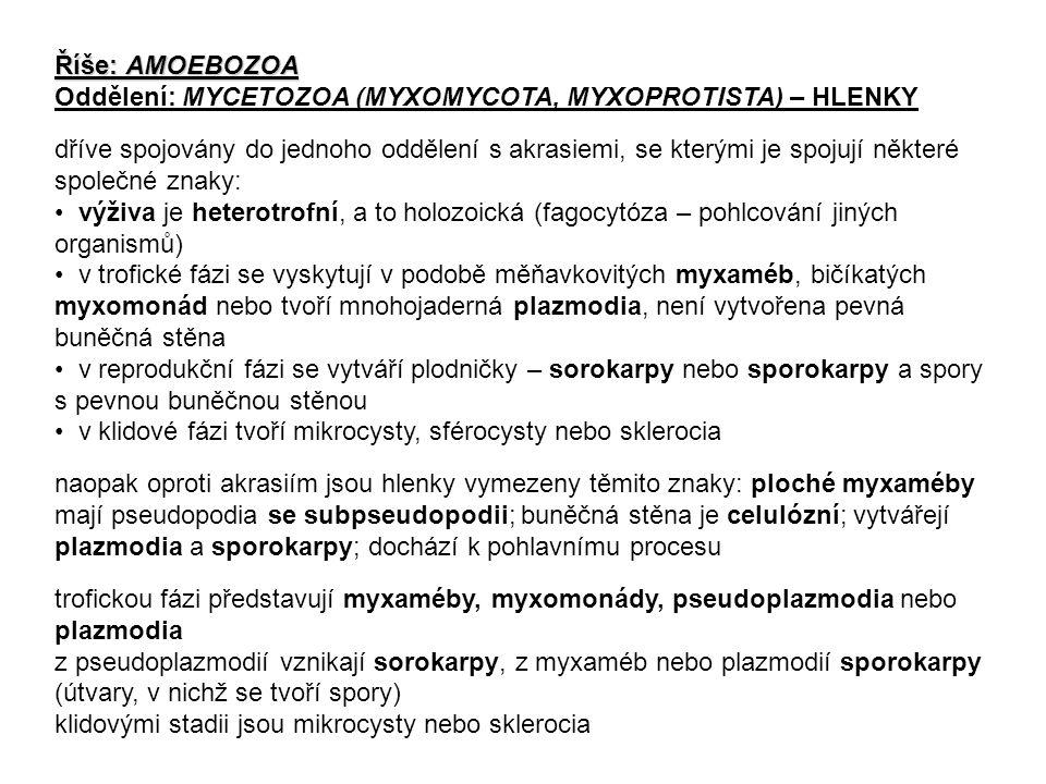 Říše: AMOEBOZOA Oddělení: MYCETOZOA (MYXOMYCOTA, MYXOPROTISTA) – HLENKY dříve spojovány do jednoho oddělení s akrasiemi, se kterými je spojují některé společné znaky: výživa je heterotrofní, a to holozoická (fagocytóza – pohlcování jiných organismů) v trofické fázi se vyskytují v podobě měňavkovitých myxaméb, bičíkatých myxomonád nebo tvoří mnohojaderná plazmodia, není vytvořena pevná buněčná stěna v reprodukční fázi se vytváří plodničky – sorokarpy nebo sporokarpy a spory s pevnou buněčnou stěnou v klidové fázi tvoří mikrocysty, sférocysty nebo sklerocia naopak oproti akrasiím jsou hlenky vymezeny těmito znaky: ploché myxaméby mají pseudopodia se subpseudopodii; buněčná stěna je celulózní; vytvářejí plazmodia a sporokarpy; dochází k pohlavnímu procesu trofickou fázi představují myxaméby, myxomonády, pseudoplazmodia nebo plazmodia z pseudoplazmodií vznikají sorokarpy, z myxaméb nebo plazmodií sporokarpy (útvary, v nichž se tvoří spory) klidovými stadii jsou mikrocysty nebo sklerocia