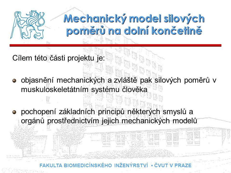 FAKULTA BIOMEDICÍNSKÉHO INŽENÝRSTVÍ ČVUT V PRAZE Mechanický model silových poměrů na dolní končetině Cílem této části projektu je: objasnění mechanických a zvláště pak silových poměrů v muskuloskeletátním systému člověka pochopení základních principů některých smyslů a orgánů prostřednictvím jejich mechanických modelů