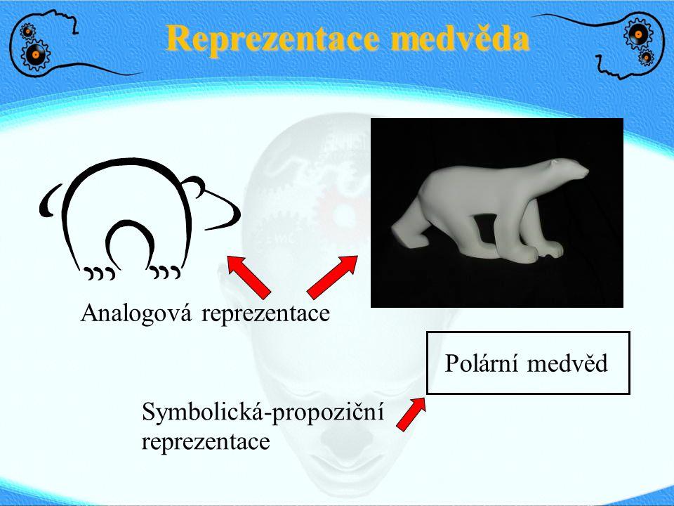 Reprezentace medvěda Polární medvěd Analogová reprezentace Symbolická-propoziční reprezentace
