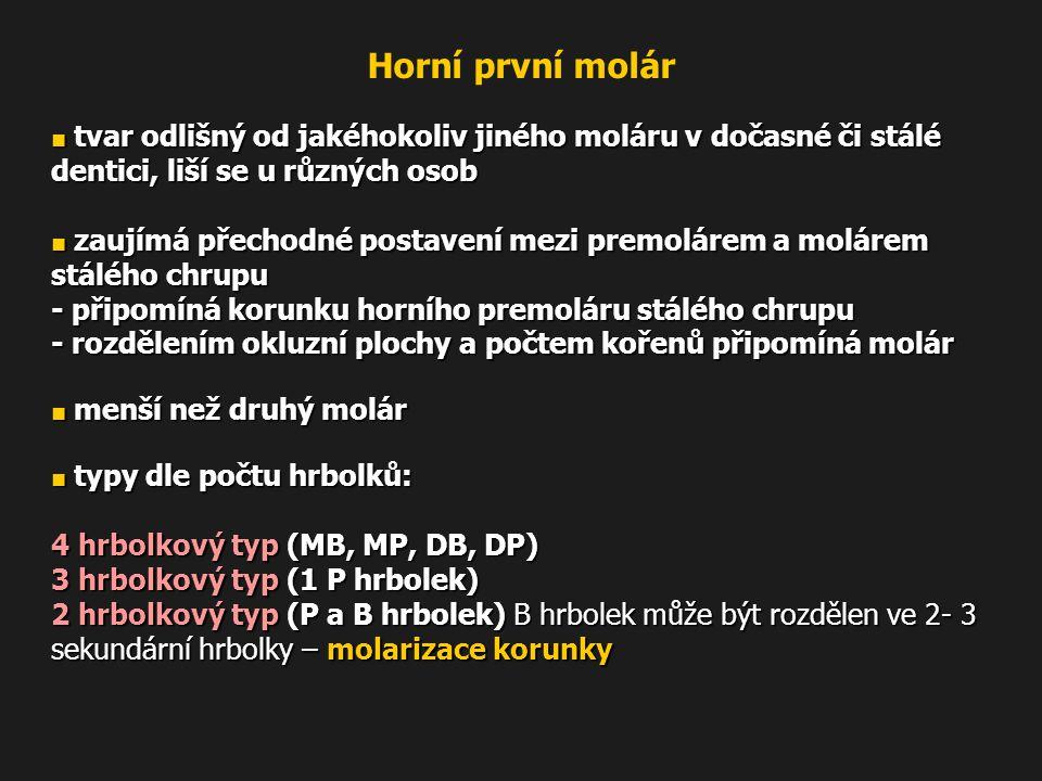 ■ tvar odlišný od jakéhokoliv jiného moláru v dočasné či stálé dentici, liší se u různých osob ■ zaujímá přechodné postavení mezi premolárem a molárem