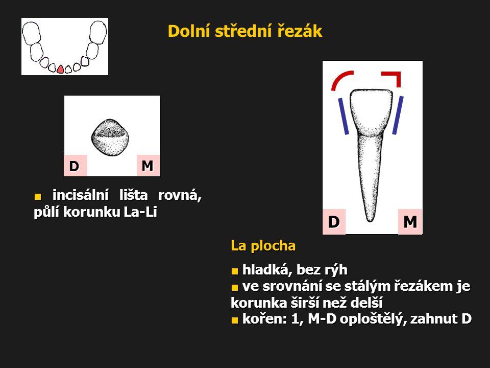Dolní střední řezák M D ■ incisální lišta rovná, půlí korunku La-Li La plocha ■ hladká, bez rýh ■ ve srovnání se stálým řezákem je korunka širší než d