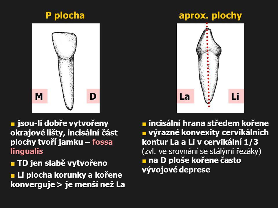 P plocha aprox. plochy MD ■ jsou-li dobře vytvořeny okrajové lišty, incisální část plochy tvoří jamku – fossa lingualis ■ TD jen slabě vytvořeno ■ Li