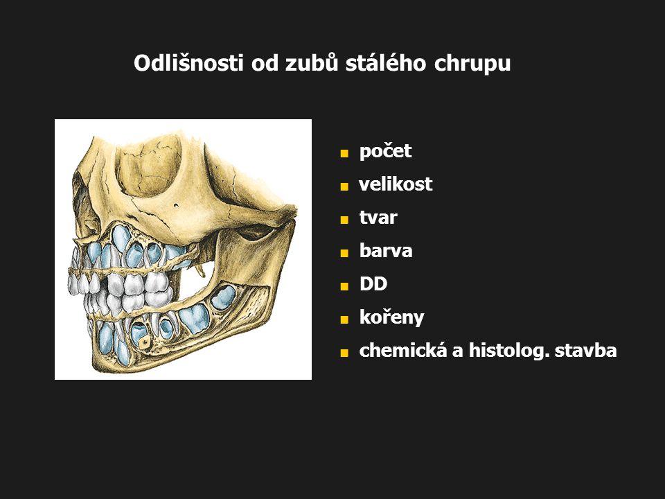 Odlišnosti od zubů stálého chrupu ■ počet ■ velikost ■ tvar ■ barva ■ DD ■ kořeny ■ chemická a histolog. stavba