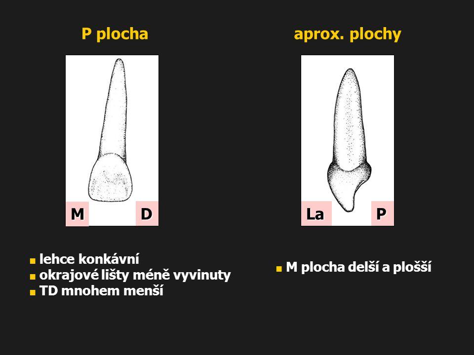 M D P plochaaprox. plochy LaP ■ lehce konkávní ■ okrajové lišty méně vyvinuty ■ TD mnohem menší ■ M plocha delší a plošší