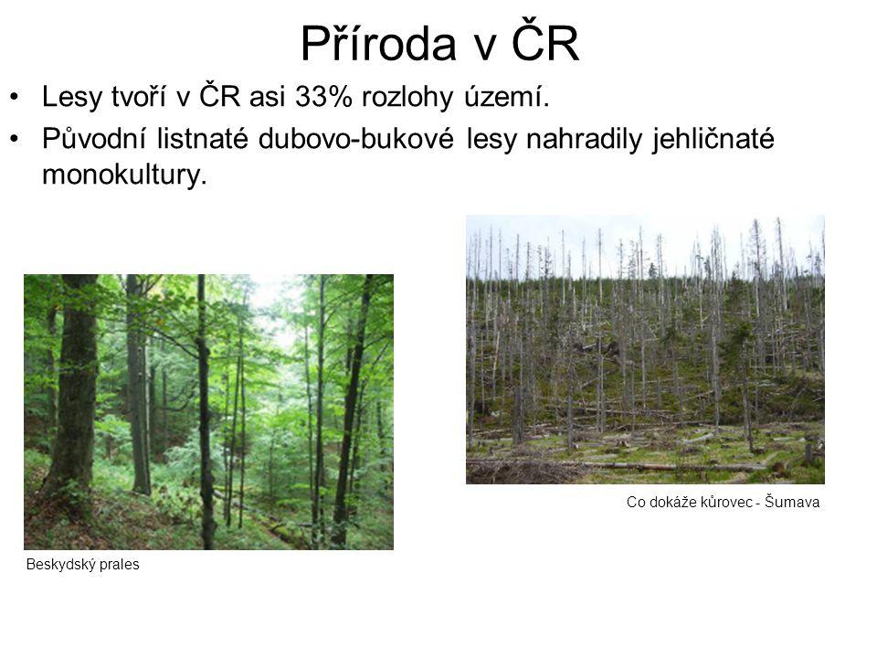Příroda v ČR Lesy tvoří v ČR asi 33% rozlohy území. Původní listnaté dubovo-bukové lesy nahradily jehličnaté monokultury. Beskydský prales Co dokáže k