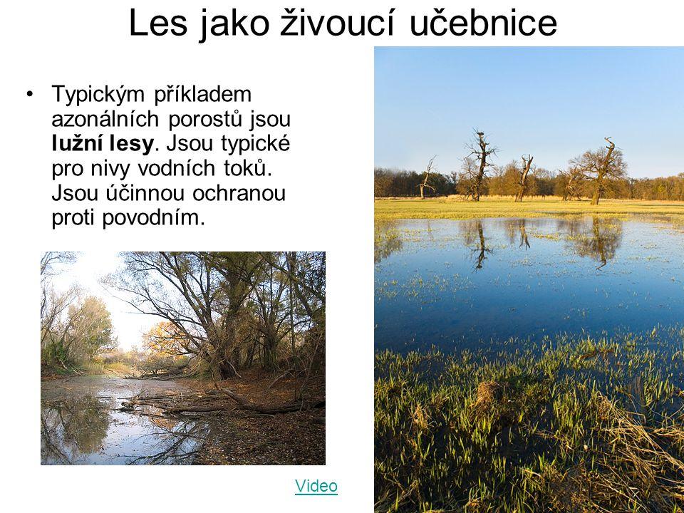 Les jako živoucí učebnice Typickým příkladem azonálních porostů jsou lužní lesy. Jsou typické pro nivy vodních toků. Jsou účinnou ochranou proti povod