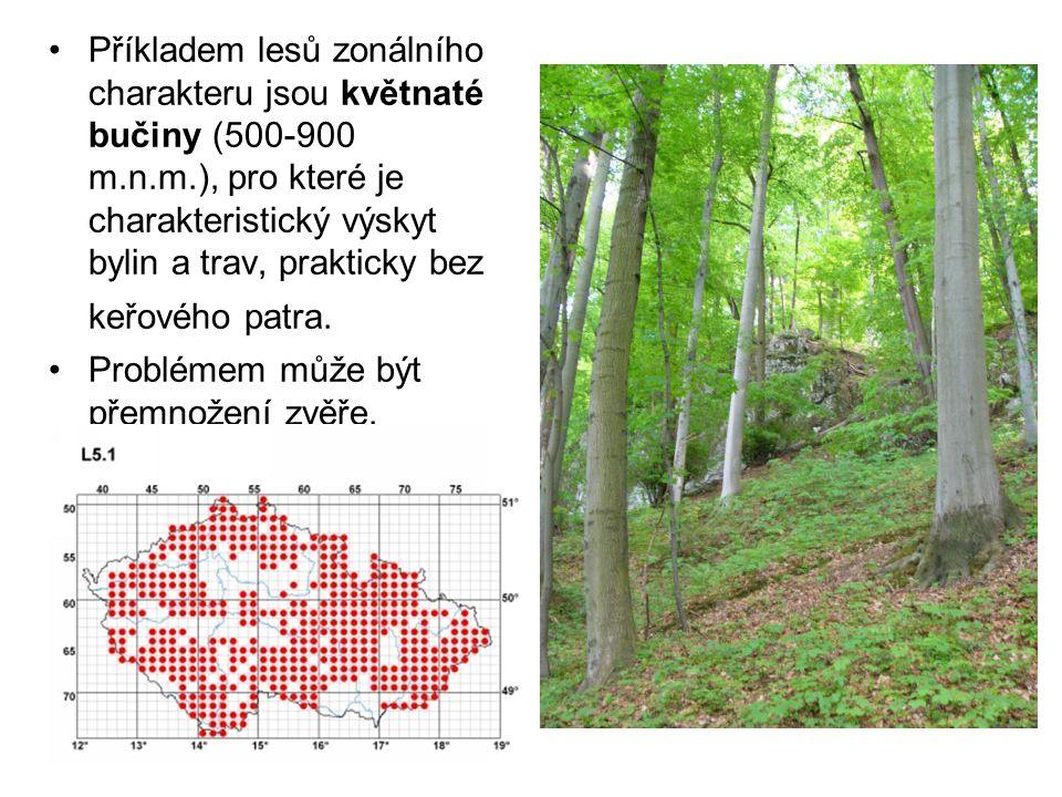 Příkladem lesů zonálního charakteru jsou květnaté bučiny (500-900 m.n.m.), pro které je charakteristický výskyt bylin a trav, prakticky bez keřového p