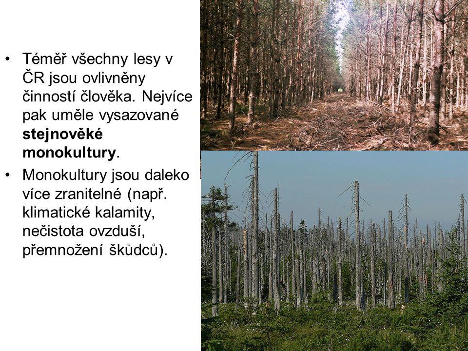 Téměř všechny lesy v ČR jsou ovlivněny činností člověka. Nejvíce pak uměle vysazované stejnověké monokultury. Monokultury jsou daleko více zranitelné