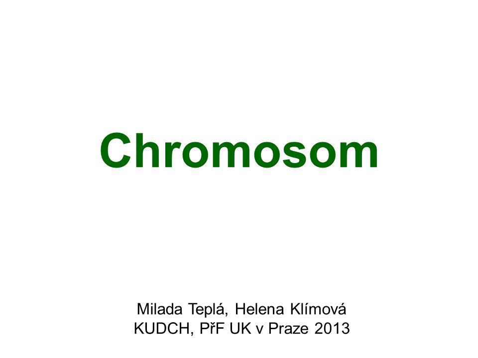 Chromosom Jádro lidské buňky – průměr cca 5-8 μm DNA – cca 2 m V eukaryotních buňkách – molekuly DNA jsou asociovány se specifickými proteiny a sbaleny do chromosomů.