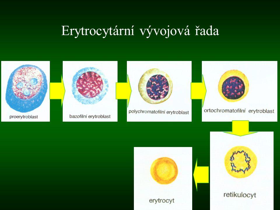Erytrocytární vývojová řada