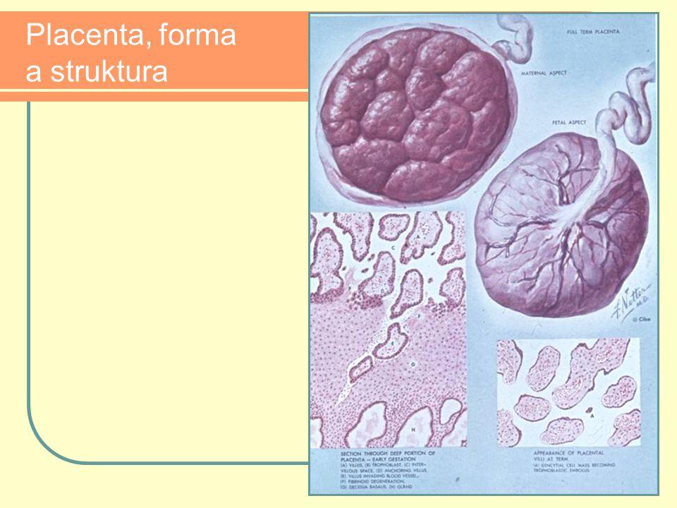 Placenta, forma a struktura