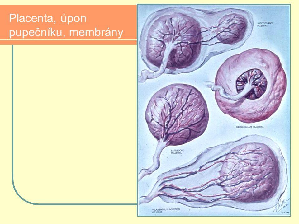 Placenta, úpon pupečníku, membrány