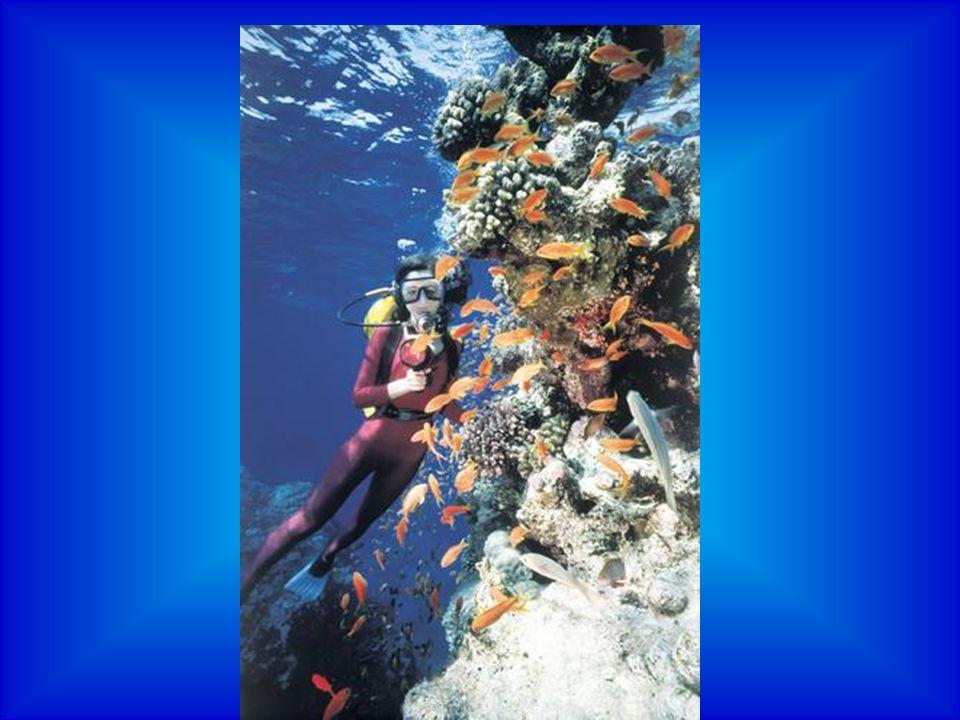 Korálnatci žijí v čisté, prokyselené vodě, dosti teplé (25 až 29 stupňů), se stejnoměrnou, poměrně vysokou slaností s obsahem vápenatých iontů a stejnoměrnými mořskými proudy.