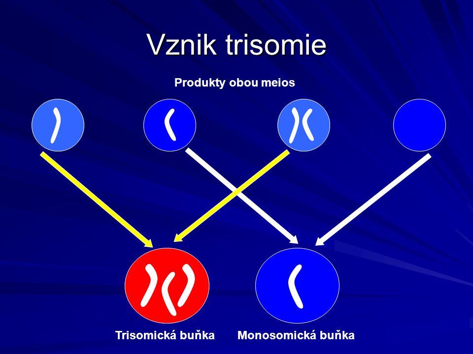 Vznik trisomie Produkty obou meios Monosomická buňka Trisomická buňka