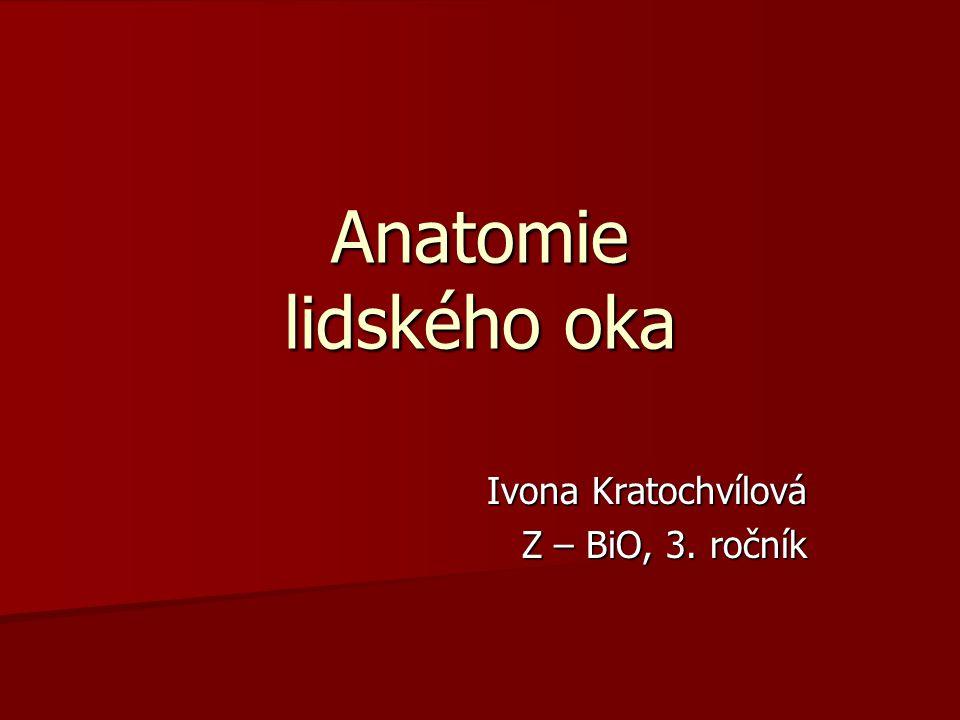 Anatomie lidského oka Ivona Kratochvílová Z – BiO, 3. ročník