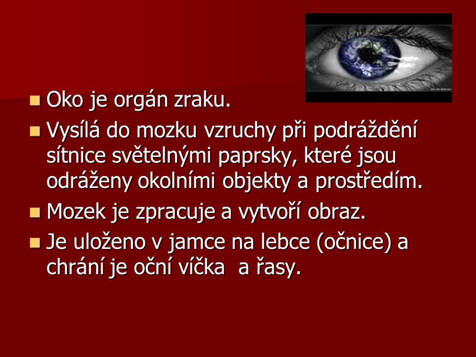 Oko je orgán zraku. Oko je orgán zraku. Vysílá do mozku vzruchy při podráždění sítnice světelnými paprsky, které jsou odráženy okolními objekty a pros