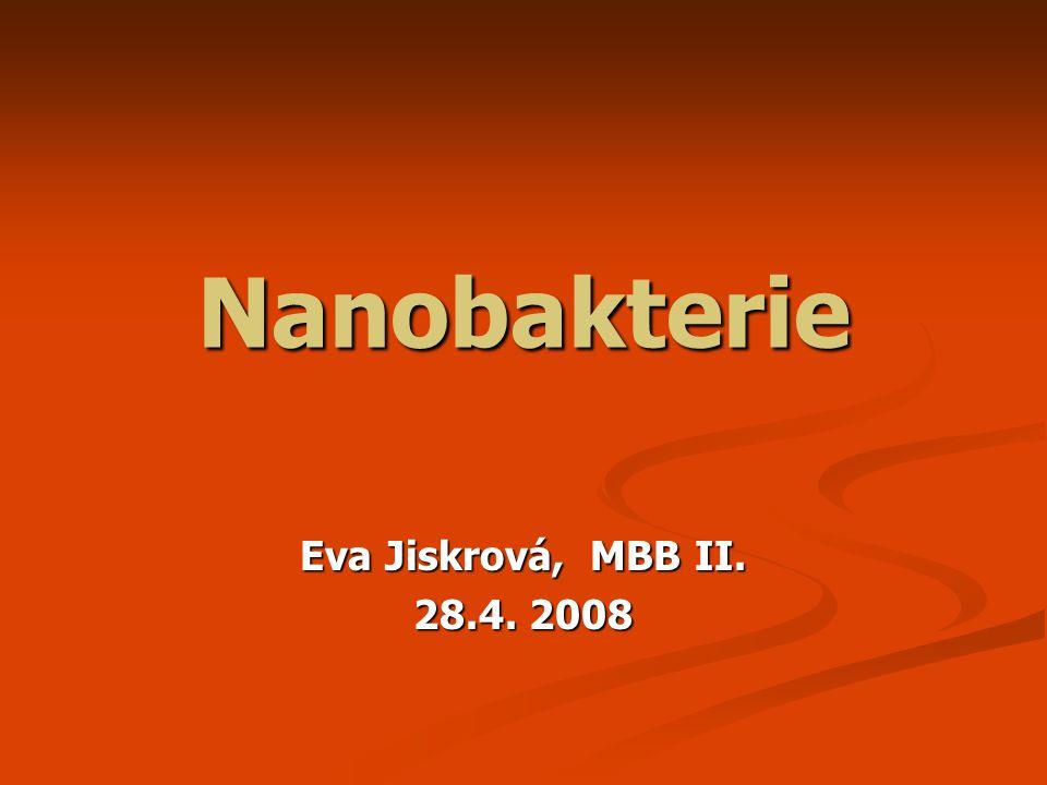 Nanobakterie Eva Jiskrová, MBB II. 28.4. 2008