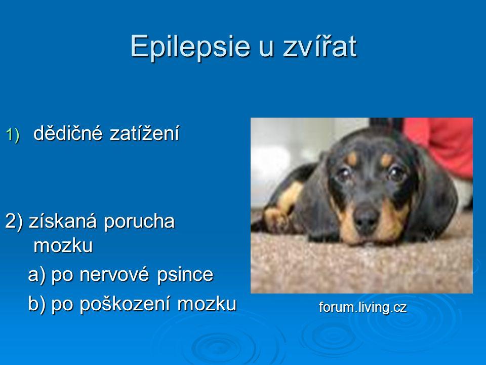 Epilepsie u zvířat 1) dědičné zatížení 1) dědičné zatížení 2) získaná porucha mozku 2) získaná porucha mozku a) po nervové psince a) po nervové psince
