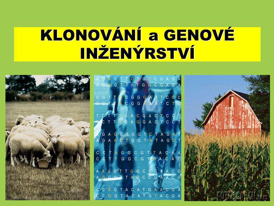 1)úvodní přednáška 2)PCR techniky 3)mutageneze in vitro 4)cDNA a genomové knihovny 5)sekvencování genomů 6)transgenoze rostlin 7)genové čipy 8)transgenoze živočichů 9)genová terapie 10) klonovací strategie a expresní systémy 11) seminář – nástroje molekulární biologie v praxi