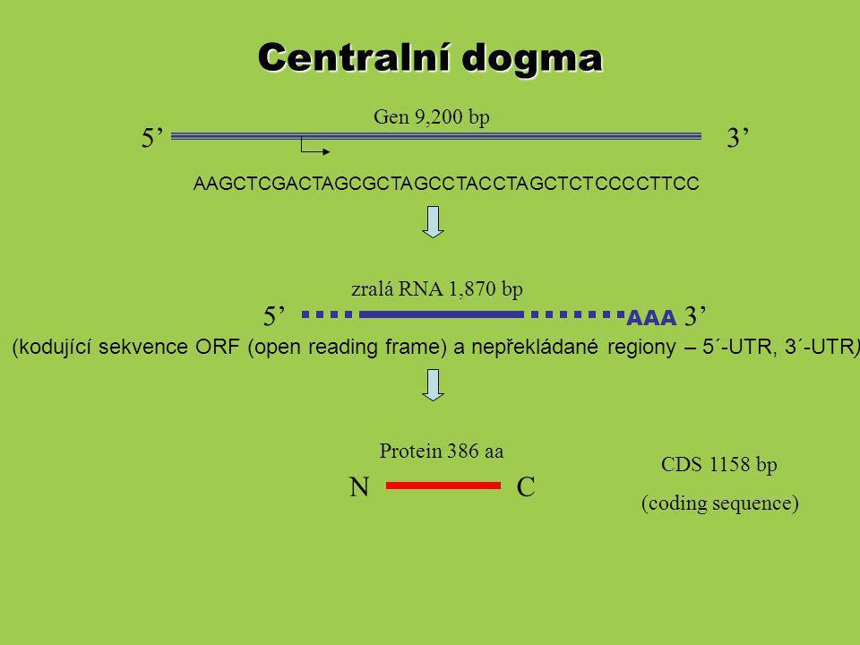 Princip Southern a Northern blotu Hybridizační sondy Hybridizační sondy jsou značené: chemiluminiscenčně BIOTIN detekce AVIDIN-HRP, DIGOXYGENIN fluorescenčně FLUORESCEIN, RHODAMIN radioaktivně dAT 32 P, 3 H Příprava sond: 5´ a 3´koncové značení – nízká citlivost pomocí RANDOM HEXAMERů a DNA polymerasy (Klenowův fragment) PCR nick translace – DNasa I a DNA polymerasa in vitro transkripce (RNA próby) FISH fluorescent in situ hybridization