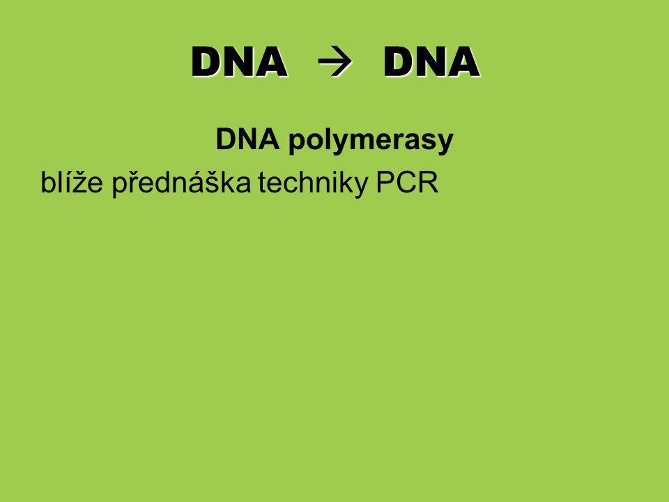 DNA  RNA Transkripce (RNA syntéza): přenos informace z DNA do RNA (nestabilní) prostřednictvím enzymu RNA Polymerasy ( DNA-dependentní RNA Polymerasa).