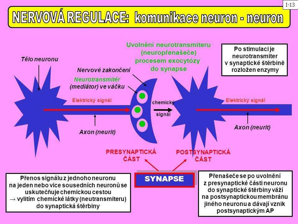 Tělo neuronu Axon (neurit) Nervové zakončení Axon (neurit) SYNAPSE PRESYNAPTICKÁ ČÁST POSTSYNAPTICKÁ ČÁST Neurotransmitér (mediátor) ve váčku Přenos s