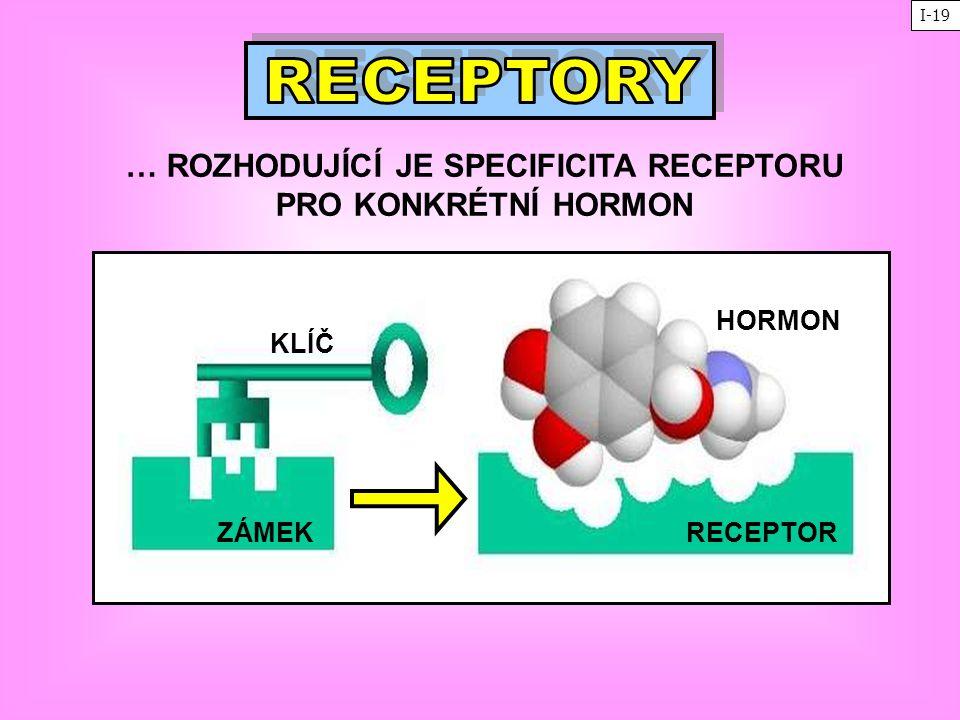 … ROZHODUJÍCÍ JE SPECIFICITA RECEPTORU PRO KONKRÉTNÍ HORMON ZÁMEK KLÍČ RECEPTOR HORMON I-19