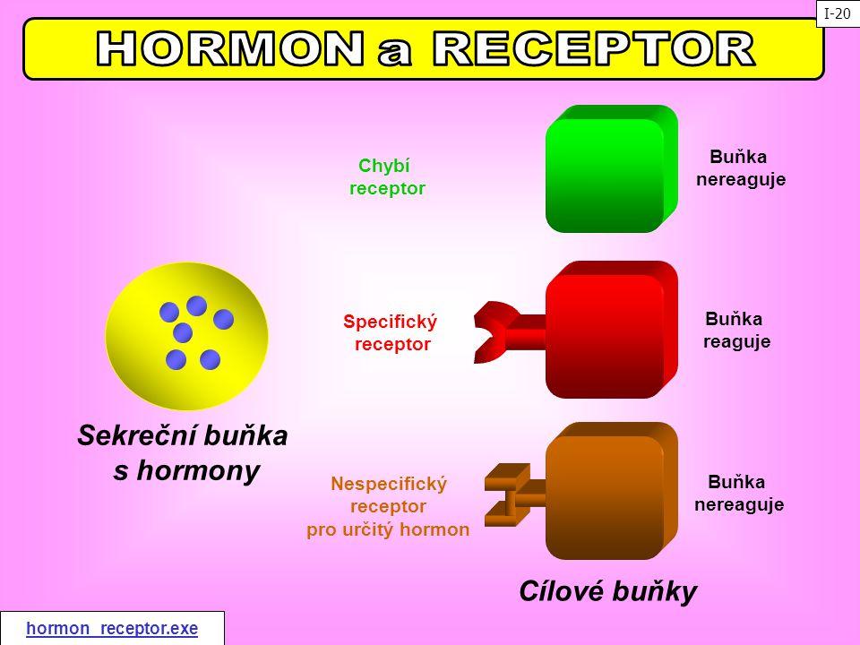 Sekreční buňka s hormony Cílové buňky Chybí receptor Specifický receptor Nespecifický receptor pro určitý hormon Buňka reaguje Buňka nereaguje Buňka n