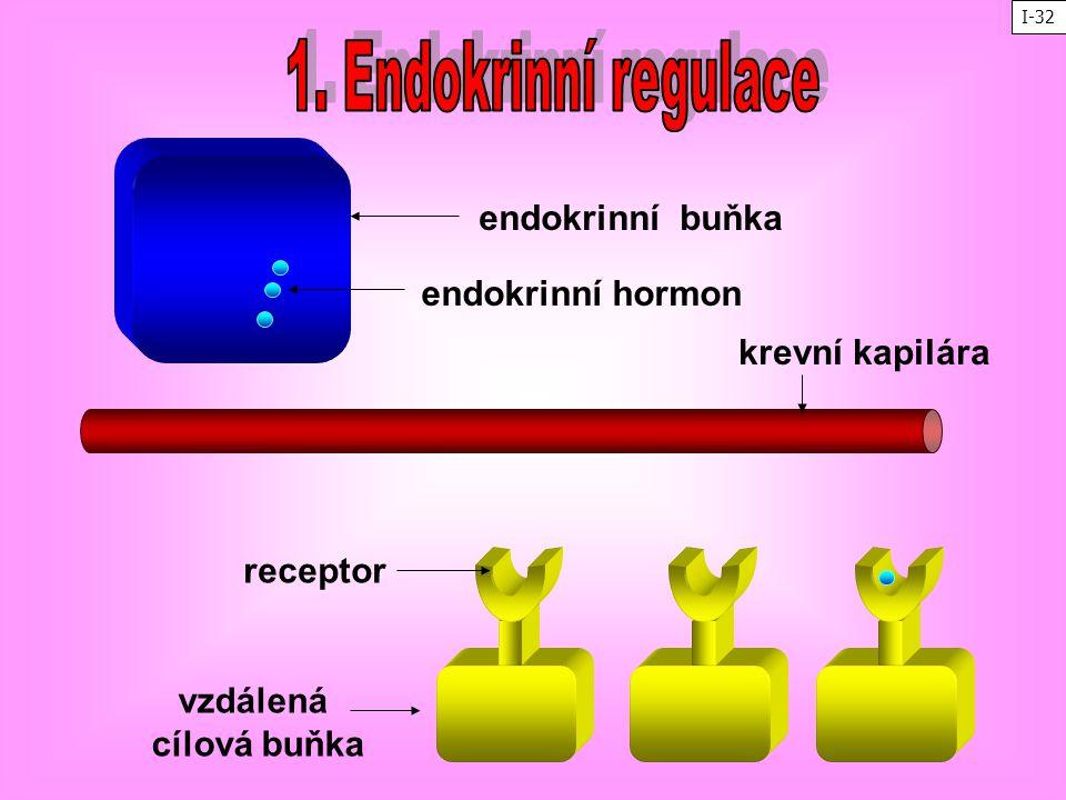 endokrinní buňka krevní kapilára vzdálená cílová buňka receptor endokrinní hormon I-32
