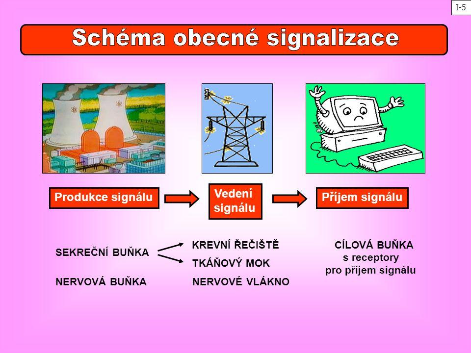 SEKREČNÍ BUŇKA NERVOVÁ BUŇKA CÍLOVÁ BUŇKA s receptory pro příjem signálu KREVNÍ ŘEČIŠTĚ TKÁŇOVÝ MOK NERVOVÉ VLÁKNO Produkce signálu Vedení signálu Pří