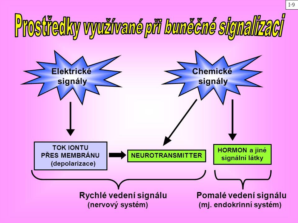 TOK IONTU PŘES MEMBRÁNU (depolarizace) NEUROTRANSMITTER HORMON a jiné signální látky Chemické signály Elektrické signály Rychlé vedení signálu (nervov