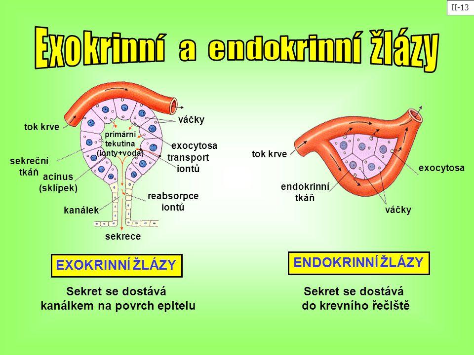 tok krve sekreční tkáň acinus (sklípek) kanálek sekrece reabsorpce iontů transport iontů exocytosa váčky primární tekutina (ionty+voda) endokrinní tká