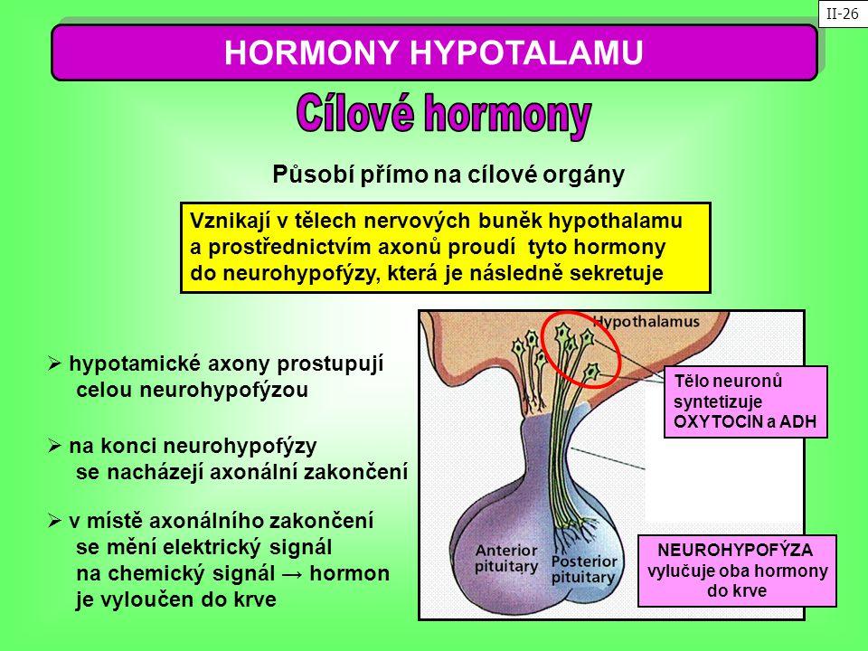 HORMONY HYPOTALAMU Působí přímo na cílové orgány Vznikají v tělech nervových buněk hypothalamu a prostřednictvím axonů proudí tyto hormony do neurohyp