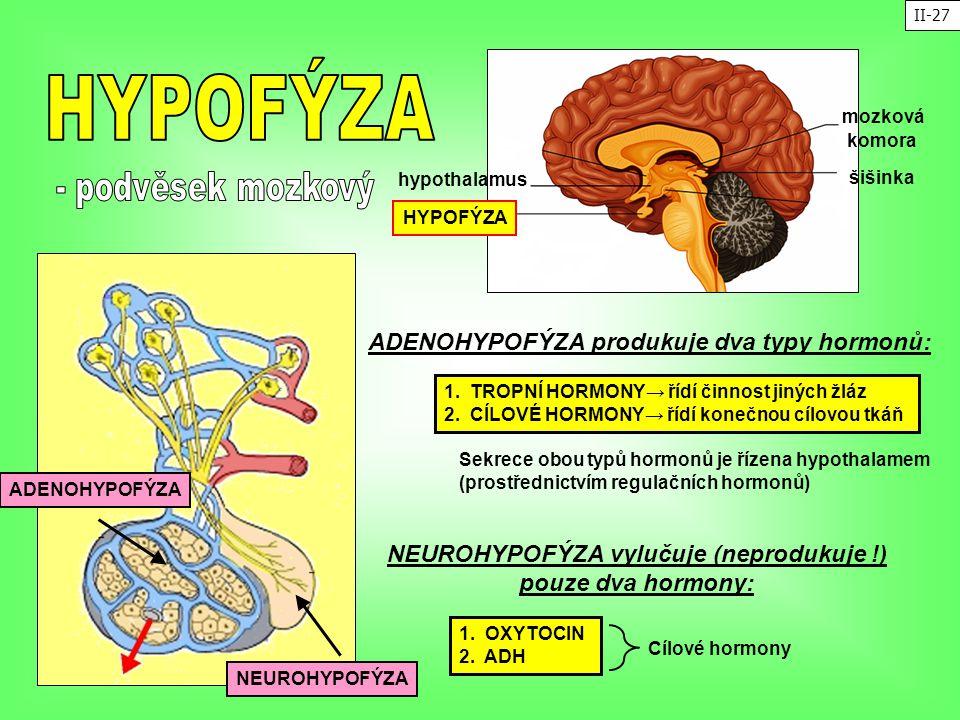 šišinka mozková komora HYPOFÝZA hypothalamus ADENOHYPOFÝZA NEUROHYPOFÝZA 1. TROPNÍ HORMONY→ řídí činnost jiných žláz 2. CÍLOVÉ HORMONY→ řídí konečnou