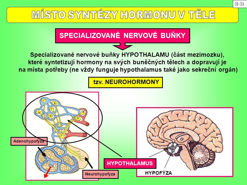 SPECIALIZOVANÉ NERVOVÉ BUŇKY tzv. NEUROHORMONY Specializované nervové buňky HYPOTHALAMU (část mezimozku), které syntetizují hormony na svých buněčných
