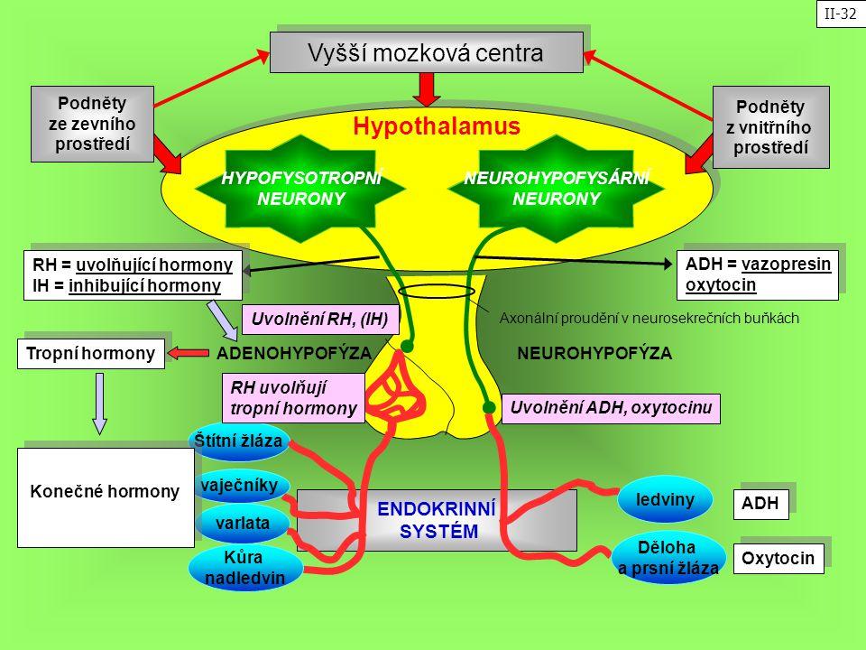 ENDOKRINNÍ SYSTÉM HYPOFYSOTROPNÍ NEURONY NEUROHYPOFYSÁRNÍ NEURONY Hypothalamus ADENOHYPOFÝZANEUROHYPOFÝZA Podněty ze zevního prostředí Podněty z vnitř